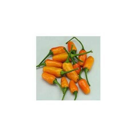 Semi di peperoncino Short Yellow Tabasco