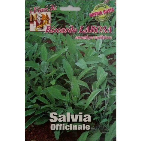 Semi di salvia officinale buste sigillate semi di piante aromatiche