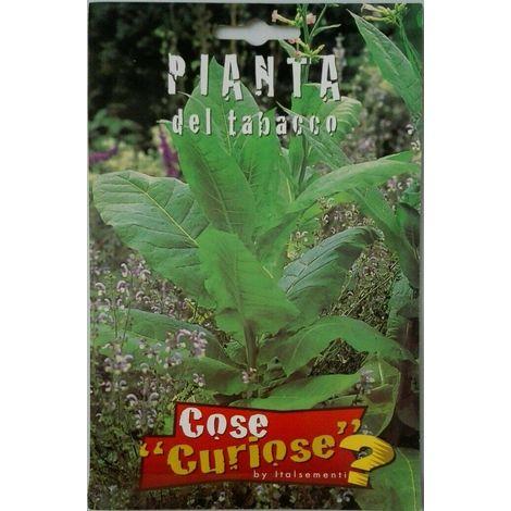 Semi di tabacco pianta del tabacco sigillati seme orto giardino balcone