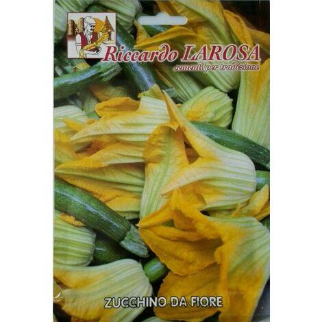 Semi di Zucchino da Fiore Tondo Piacenza President orto seme zucchina Zucchine