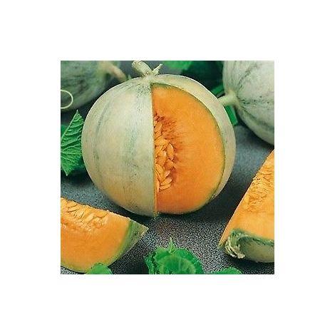 Semi Melone Cantalupo Charentais, 10 grammi
