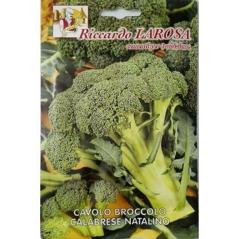Semi orto cavolo broccolo calabrese natalino sigillati sementi cavoli broccoli