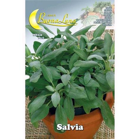 Semi Orto Salvia Articolo Da Giardinaggio Conf. 10 Pz
