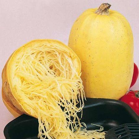 Semi Zucca Spaghetti