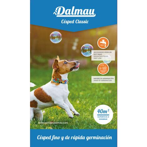 Semillas de Césped - MEZCLA DALMAU CLÁSICA - 1 kg - Césped fino de rápida germinación y bajo consumo de agua - Dalmau