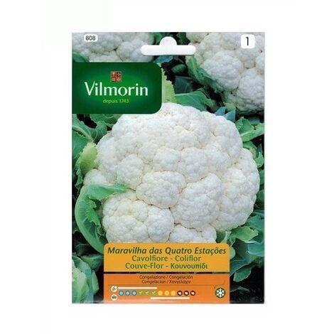 Semillas de COLIFLOR CUATRO ESTACIONES Vilmorin 2g