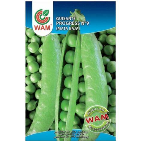 Semillas de Grelos de Santiago WAM - Sobre 100 gr