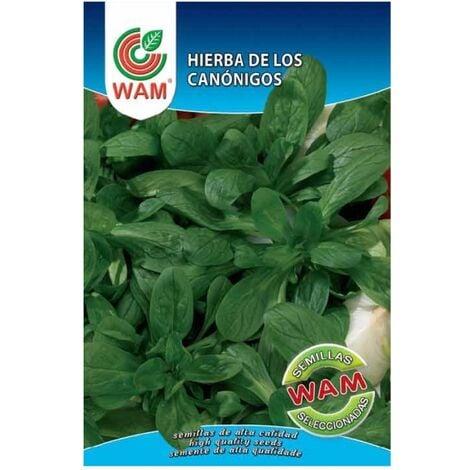 Semillas de Hierba de los Canónigos WAM - Sobre 10 gr.