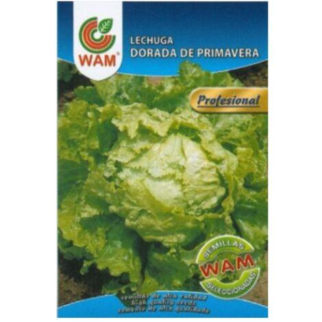 Semillas de Lechuga Dorada de Primavera WAM - Sobre con 6 gr