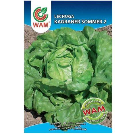Semillas de Lechuga Kagraner Sommer 2 WAM - Sobre 6 gr.
