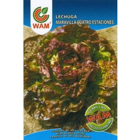 Semillas de Lechuga Maravilla 4 estaciones WAM - Sobre 6 gr.