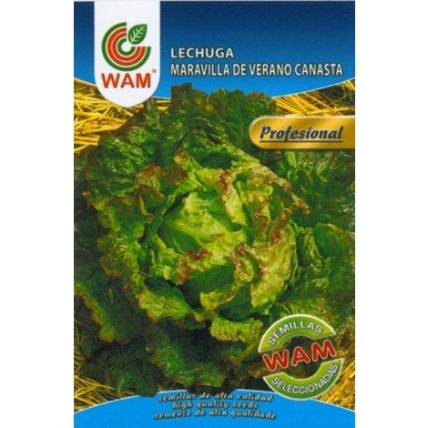 Semillas de Lechuga Maravilla de Verano Canasta WAM - Sobre 6 gr.