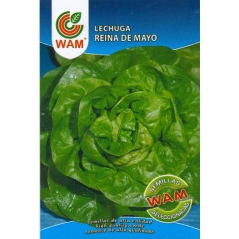 Semillas de Lechuga Reina de Mayo WAM - Sobre 6 gr.