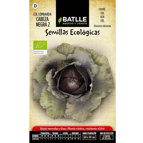 Semillas ecológicas de Col lombarda cabeza negra 2