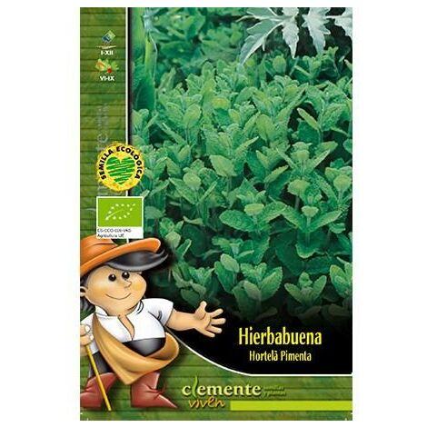 Semillas Ecológicas De Hierbabuena