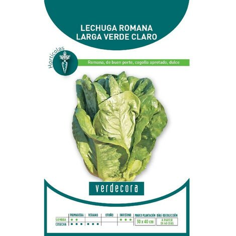 SEMILLAS LECHUGA ROMANA LARGA VERDE VERDECORA
