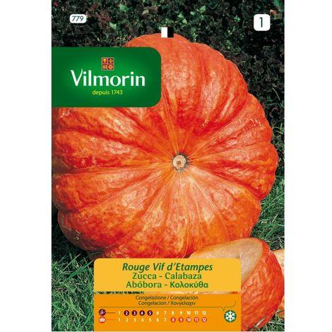 Semillas Vilmorin CALABAZA ROUGE VIF D' ETAMPES - 7 gr