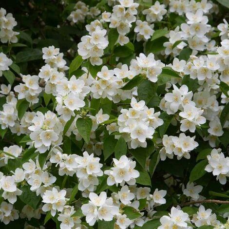 Arbustos en flor según la estación