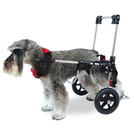 Silla de ruedas Canis - Mobile disponible en varias opciones