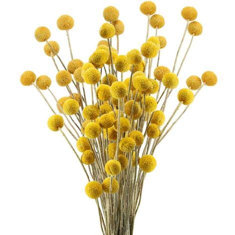 SOEKAVIA 40 Tiges Fleurs Séchées Naturelles Fleurs de Craspedia Séchées Billy Button Balles Bouquet Floral pour Noël Mariage Hiver Maison Décoration Florale
