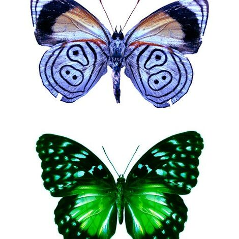 Sticker de fenêtre no.32 butterflies set1