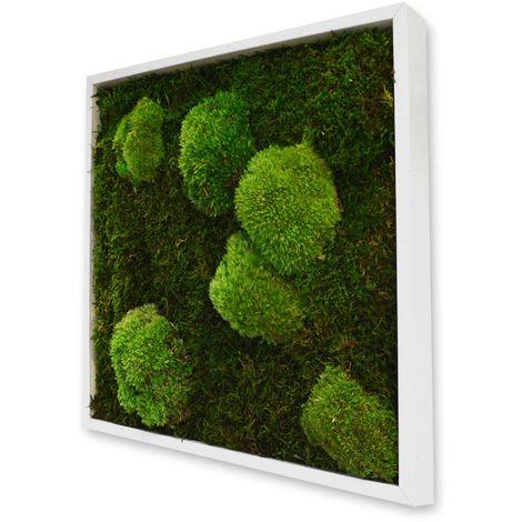 Tableau végétal carré mousse avec plantes stabilisées
