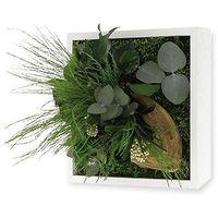 Tableau végétal nature Mono avec plantes stabilisées