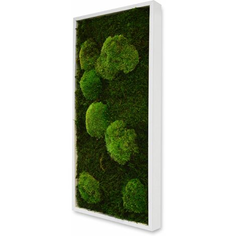 Tableau végétal rectangle mousse avec plantes stabilisées