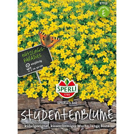 Tagetes Studentenblume Sol