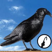 Taubenschreck Krähe schwarz