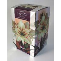 Taylors - Amaryllis Bulb Gift Pack - Magic Green