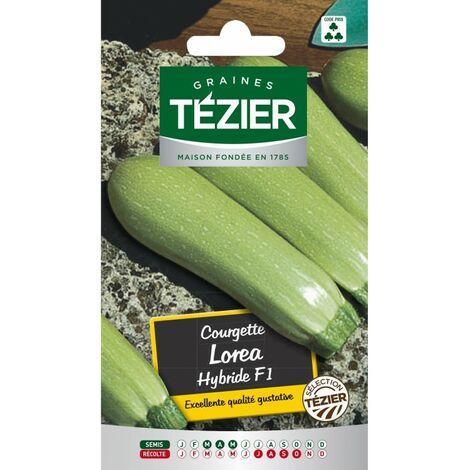 Tézier - Courgette Lorea HF1