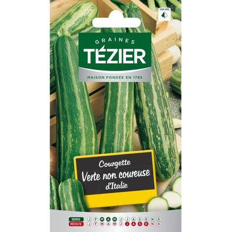 Tezier - Courgette verte non coureuse dItalie