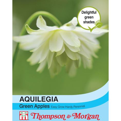 Flowers 200 Seed Dianthus Maiden Brilliancy Thompson /& Morgan