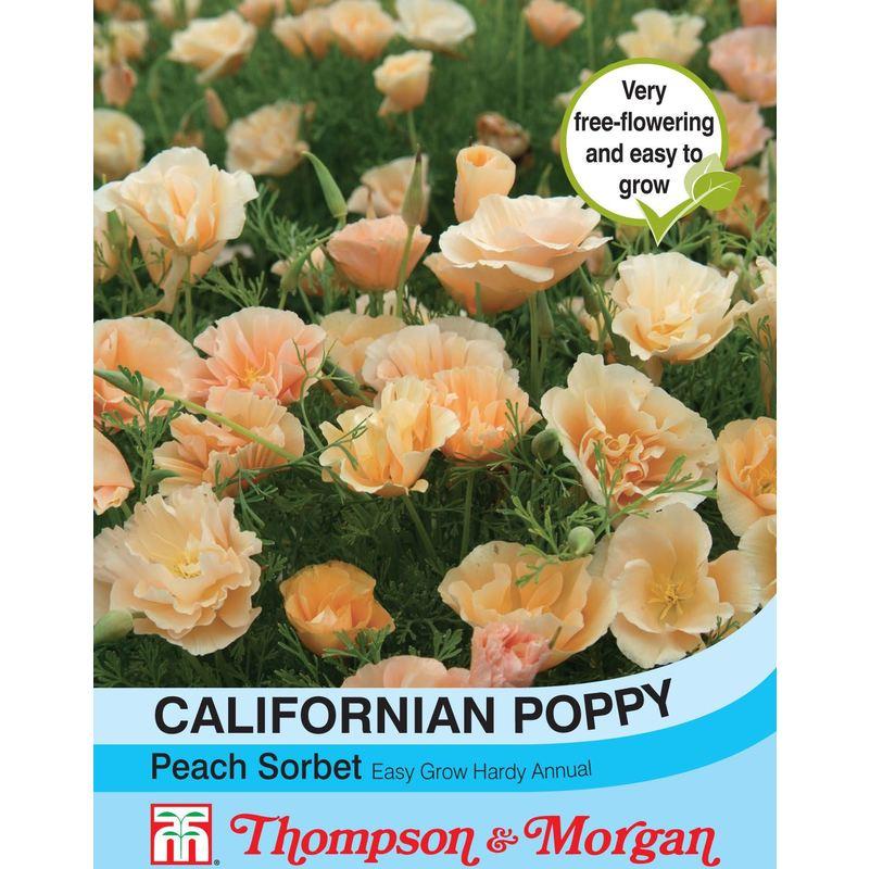 Eschscholtzia Peach Sorbet Kings Seeds - 150 Seeds Californian Poppy