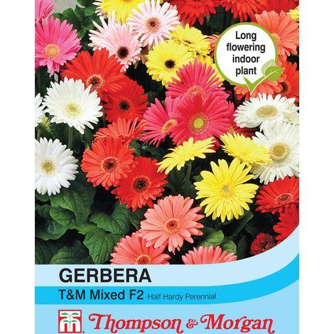 Thompson & Morgan - Flowers - Gerbera T&M Mixed F2 Hybrid - 30 Seed