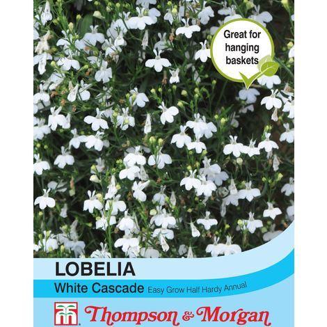 Thompson Morgan Flowers Lobelia Trailing White Cascade