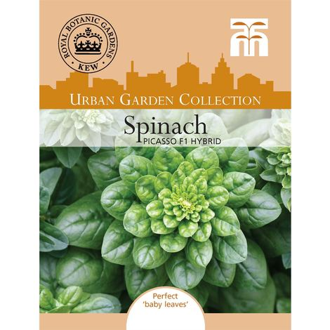 Spinach Corvette F1-300 Seeds Johnsons Vegetable