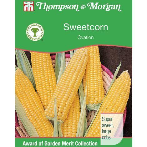 Johnsons Seeds Sweet Corn Bodacious RM F1 Seed