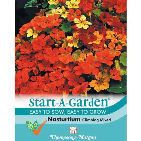 Thompson & Morgan - Start-A-Garden Flower - Nasturtium Climbing Mixed - 25 Seed