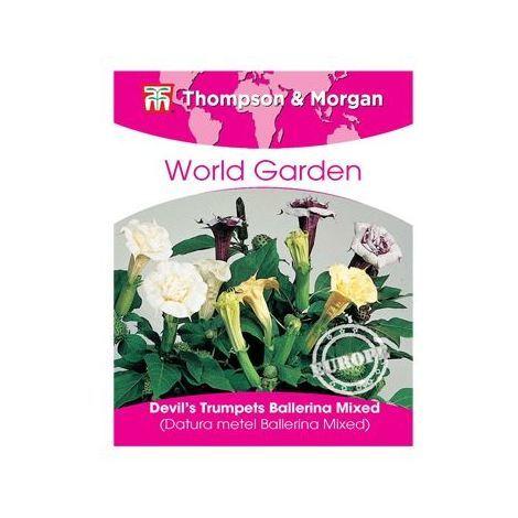 Thompson & Morgan - World Garden - Flowers - Devils Trumpets Ballerina Mixed - 8 Seed