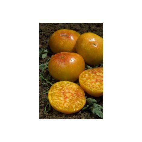 Tomate ananas - 0,2g