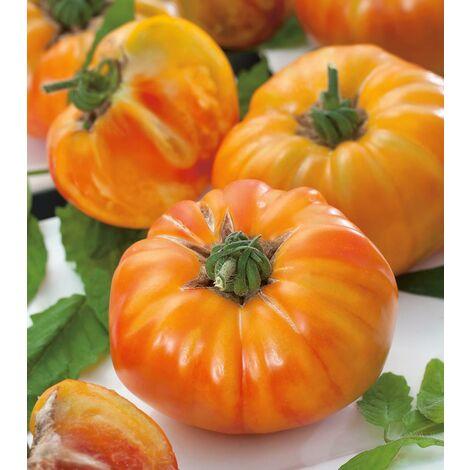 TOMATE ANANAS F1 - 25 semences - Tomates