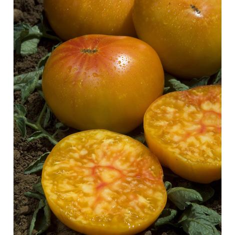 ananas tomate
