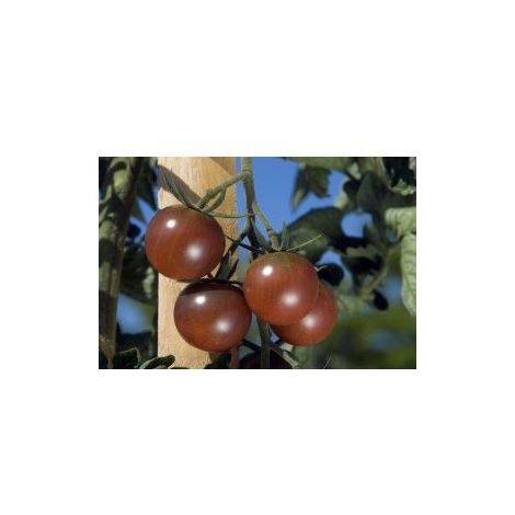 Tomate Black Cherry - 0,2g