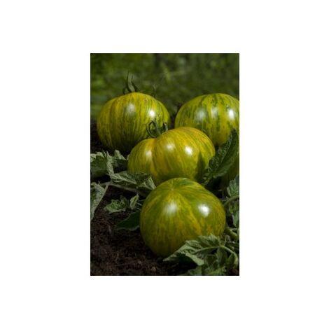 Tomate Green Zebra - 0,2g