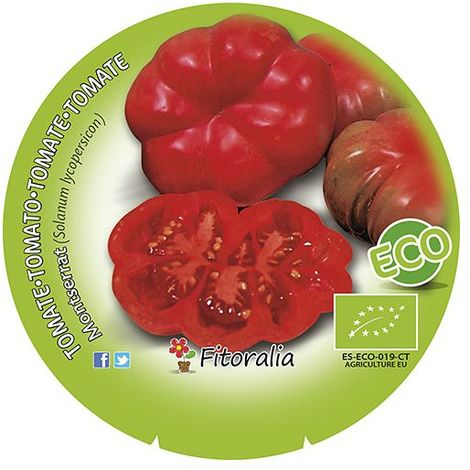 Tomate Montserrat - 12Uds. - Alveolos