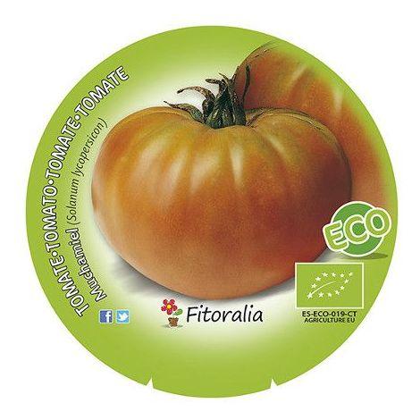 Tomate Muchamiel - Maceta de 10,5cm