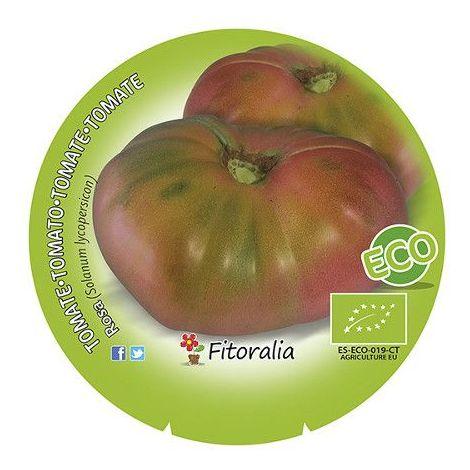 Tomate Rosa - 12Uds. - Alveolos