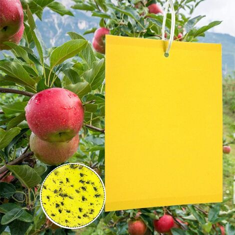 Trampas para insectos, 50 papeles adhesivos de doble cara, papeles adhesivos amarillos para hojas blancas para moscas anti-insectos, hojas anti moscas blancas, polillas, plantas de jardín, flores, frutas